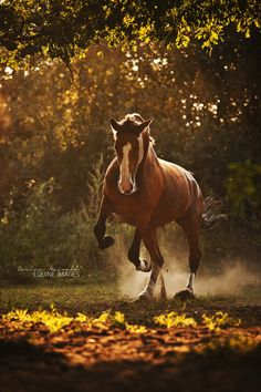 Strength in Sunlight by Carina Maiwald on 500px