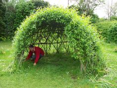 living willow den