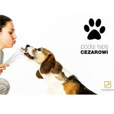 PODAJ ŁAPĘ CEZAROWI to akcja charytatywna, która ma na celu zbiórkę pieniędzy na leczenie psa Cezara. W ramach akcji proponujemy wykonanie zdjęcia za 10 zł (można dać więcej :)) w studio Foto Melcer. Do zdjęć zapraszamy wszystkich miłośników zwierząt ze swoimi pupilami lub bez. Wykonane zdjęcie udostępnimy na FB. Dochód z akcji w całości przekazany zostanie na leczenie pieska. Uwaga! Akcja trwa do końca kwietnia!! Dla osoby, ze zdjęcia które zbierze najwięcej like'ów Psikurs Szkolenie Psów…