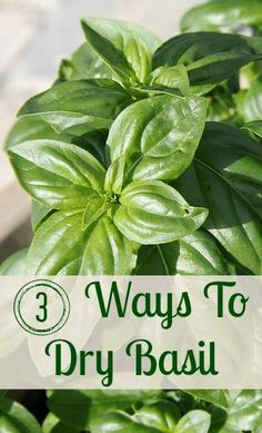 Basil is one of my favorite herbs. Here are 3 ways to dry it so that the flavor really lasts.