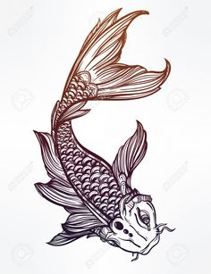 Koi Fish Drawing Koi Fish Drawing Images Stock Pictures Royalty Free Koi Fish