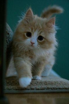 Model kitty <3 My Sweet Baby Zoey!!