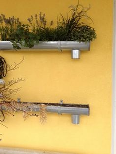 Growing vegetables / plants / flowers / herbs in gutters attached to a building / fence wall