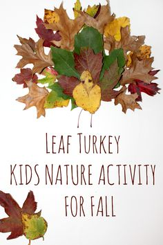 Create A Turkey From Fall Leaves Nature Craft