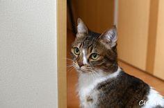 里親さんブログ幸せ見届けてきました - http://iyaiya.jp/cat/archives/74861