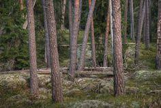 https://flic.kr/p/apRrXc   Putbergens Naturreservat sormland
