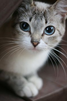 """One small cat changes coming home to an empty house to coming home."" --Pam Brown 