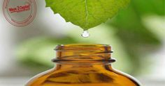 Mentha oil on MCX settled down by -1.43% at 1027.7 on sluggish demand in spot markets. Further, ample stocks position on higher supplies from producing regions