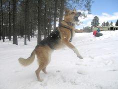 Tripod dog health tips