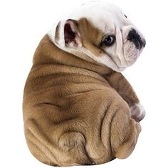 Baby Animals, Funny Animals, Cute Animals, 3d Dog, Dog Cat, Bulldogs Ingles, Summer Quilts, Dog Blanket, Bulldog Puppies