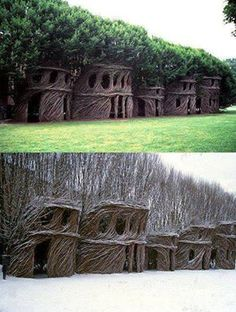 Whole new meaning of tree house! Awesome.