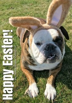 27Mar16 Fenway - Bulldogs - Happy Easter