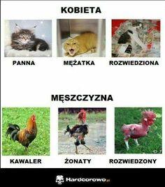 wszystkie memy z neta :v # Humor # amreading # books # wattpad Wtf Funny, Funny Fails, Funny Memes, Hilarious, Jokes, Funny Sexy, Hahaha Hahaha, Polish Memes, Weekend Humor
