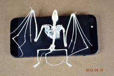 Hey, I found this really awesome Etsy listing at https://www.etsy.com/listing/169970595/maturereal-bat-skeletonsbest-for-study