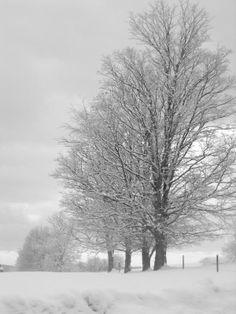 ansel adams tree images