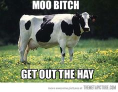 Get out the hay
