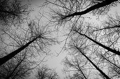 ป่า, ต้นไม้, ฤดูหนาว, หิมะ, ธรรมชาติ