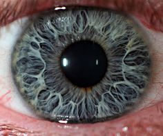 As many as 16 genes are believed to have a bearing on the colour of our eyes.    The main two are OCA2 and HERC2. When a specific mutation occurs in the HERC2 gene it has an effect on the OCA2 gene, causing blue colouration of the eyes. This is because less melanin (brown pigment that is also responsible for tanning) is produced in the iris. If OCA2 is completely shut off by HERC2 then no melanin is produced in the eyes, a condition known as albinism.