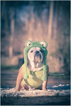 """""""Please kiss me and I will turn into a Princess"""" Posted from FB - Photo by Dogs and Tails Pet Photography >> www.dogsandtails.com"""