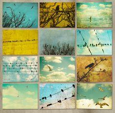 Bird photos, nature photography, bird art, set of prints, feathers, avain, rustic, print set, bird on a wire, gulls    Set of 12 Fine Art Bird