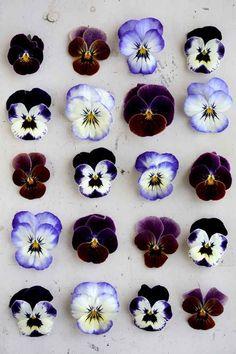 Some fancy purple flowers   15 Beautiful iPhone Wallpaper Ideas From Pinterest