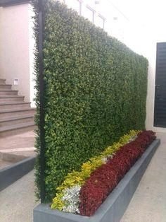 Los muros verdes darán vida a todo tipo de inmuebles industriales, comerciales y residenciales. #MurosVerdes