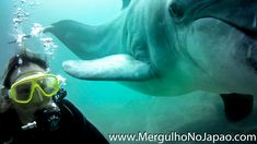 #golfinho #golfinhosfofos #golfinhos #golfinhosvideos S Videos, Diving, Dolphins