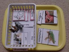 ORIGINAL PIN: This site has a bunch of ideas for projects to do on the subject of vertebrate/invertebrate. Vertebrates And Invertebrates, Animal Classification, 1st Grade Science, Preschool Ideas, Spring 2014, Sorting, Cosmic, Montessori, Homeschooling