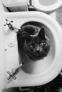 Cat Sitting In Bathroom Sink, ca. 1981. Photographer: Natalie Fobes. °