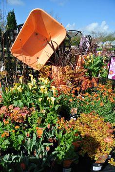 Orange Zest - Cowells Garden Centre has strong visual merchandising