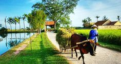 Visit Duong Lam Ancient Village - Private Tour. Duong Lam is an ancient village in Son Tay, Hanoi. It is the first-recognized ancient village in Vietnam.