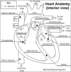Anatomy: Acronyms and Mnemonics Flashcards | Quizlet