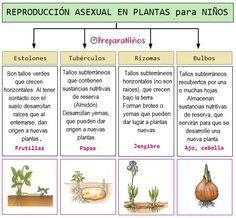 8 Ideas De Rep Plantas Partes De La Flor Reproduccion De Plantas Partes De La Planta