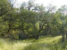 2509 North View - Lot 4 Lane, Placerville, CA 95667 - MLS 16050550 - Coldwell Banker
