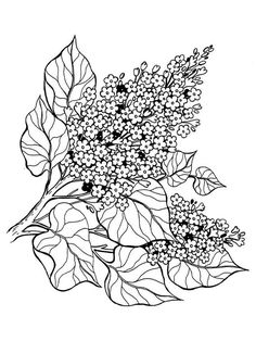 Printable Flower Coloring Pages, Colouring Pages, Coloring Pages For Kids, Coloring Books, Flowering Shrubs, Lilac Flowers, Lilacs, Junk Journal, Colored Pencils