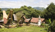 Toraja, Sulawesi - Producers of one of the finest coffees to come out of Indonesia.