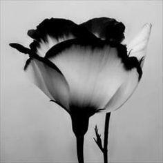 black and white idea