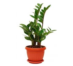 Plants on pinterest indoor houseplant and house plants - Plants that need no sunlight ...