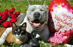 happy valentine's day images with pit blls | For Valentine's, Sharky & Max-Arthur