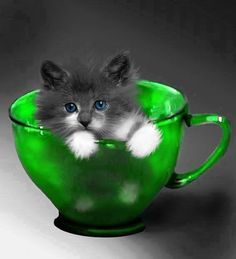 Green color splash cup with a blue-eyed kitten Animals And Pets, Baby Animals, Funny Animals, Cute Animals, Funny Cats, I Love Cats, Crazy Cats, Cute Cats, Pretty Cats