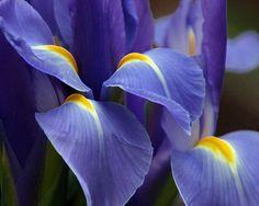 purple beautiful flower Computer Wallpaper