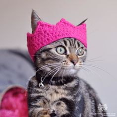 catsofinstagram:  From @talk_to_the_paw: Theres a new queen in town! #catsofinstagram [source: http://ift.tt/1UGXGec ]  Aw I think the Minky Tinky Tiger needs a crocheted princess crown! Reblog for your dash today.