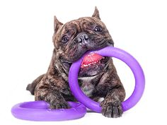 Puller Dog Toy Set of Two Purple Rings Dog Training Small Medium Large Online Pet Supplies, Dog Supplies, Baby Animals, Cute Animals, Pink Dog Collars, Cute Dog Pictures, Small Dog Breeds, Small Breed