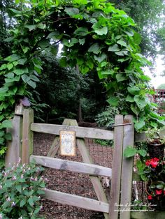 Build A Simple Branch Arbor.....Hyacinth and moonflower vines trained over the branch arbor (year two).