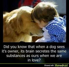 Very interesting! In some ways dogs are similar to humans, but their love is what makes them our best friends. Dogs see many of the things we do.