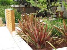 """New Zealand flax (two species in Phormium genus). Plus many hybrids. The two genus"""" one is a mountain flax that grows short and on windswept and other hard core conditions. The other is much larger and used for weaving. Maori name is harekeke Modern Landscape Design, Green Landscape, Modern Landscaping, Contemporary Landscape, Front Yard Landscaping, Landscape Architecture, Contemporary Gardens, Landscaping Ideas, Florida Landscaping"""