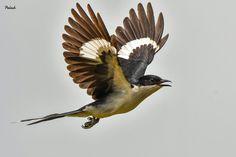 Common Kingfisher, Black Eagle, Pet Birds, Black And White, Animals, Animales, Black N White, Animaux, Black White