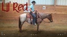 """Extra fancy red roan mare ....Daughter of Kathy's favorite mare """"Blue""""...one of the best horses we have ever had! give Ted a text/call 330-231-7500 or email: whfarmhorses@gmail.com    Great job Windy Hill Team! She is fantastic!"""
