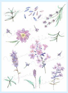 CLIP ART Watercolor Vintage Lavender Set. 11 Images. by Vianneart