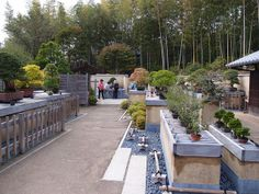 Bonsai Garden inside Japanese Garden @ Showa Kinen Park日本国営昭和記念会館  @ Tachikawa Tokyo | Flickr - Photo Sharing!